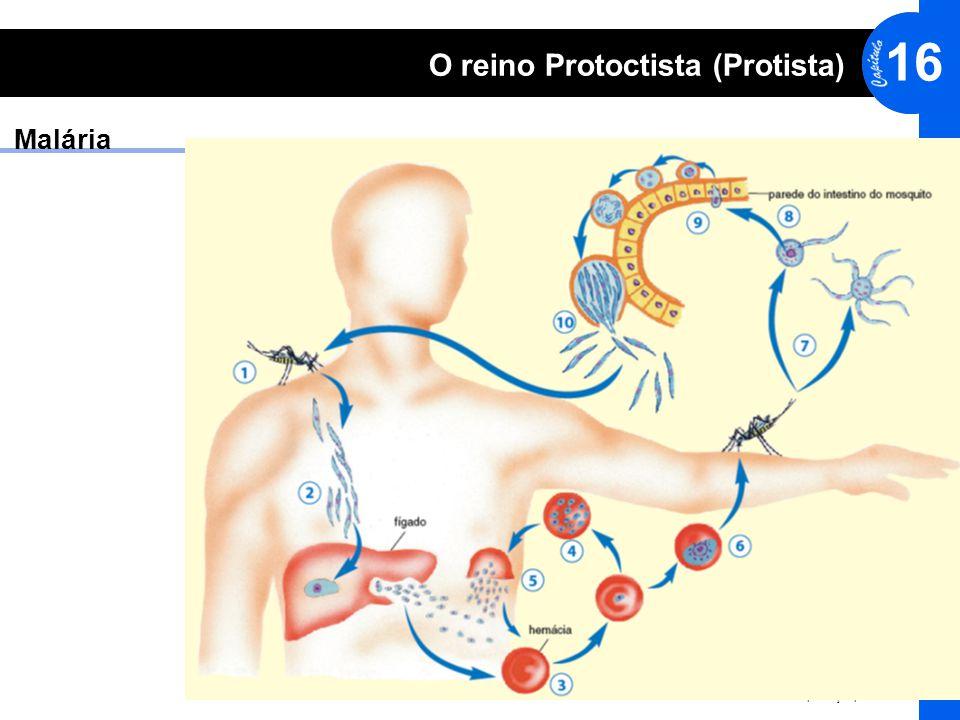 © editora HARBRA. Direitos reservados. Reprodução proibida. 16 O reino Protoctista (Protista) Malária