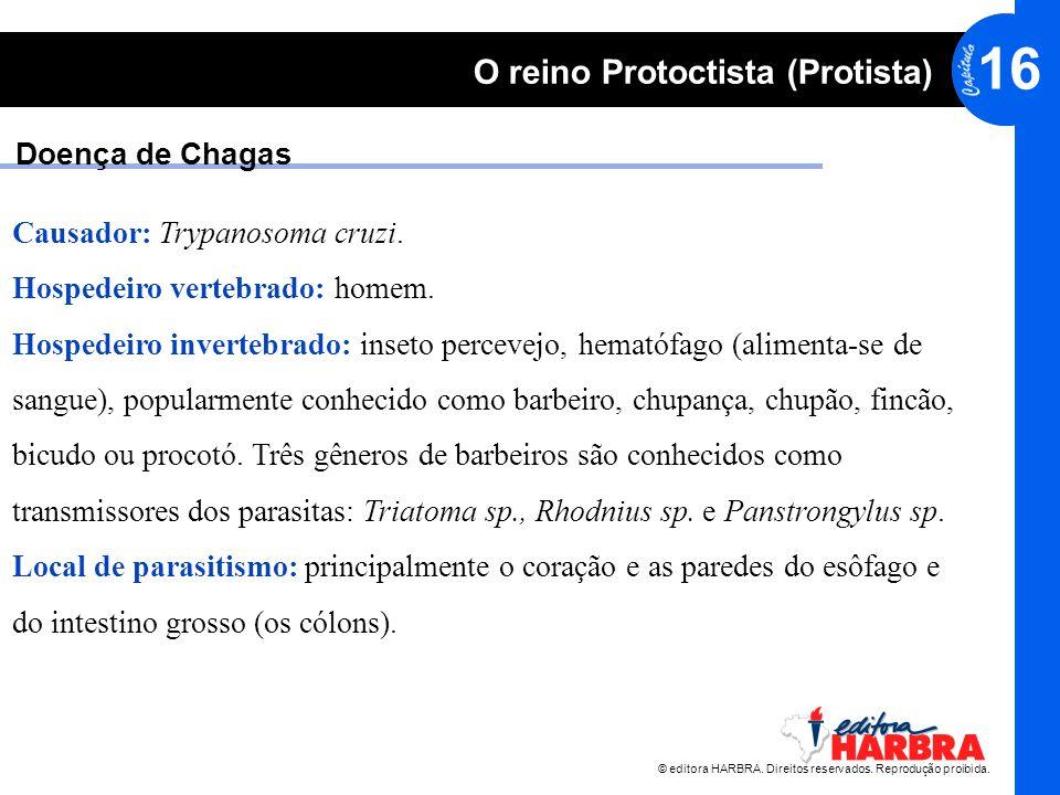 © editora HARBRA. Direitos reservados. Reprodução proibida. 16 O reino Protoctista (Protista) Doença de Chagas Causador: Trypanosoma cruzi. Hospedeiro