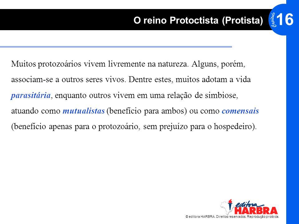 16 O reino Protoctista (Protista) Muitos protozoários vivem livremente na natureza. Alguns, porém, associam-se a outros seres vivos. Dentre estes, mui