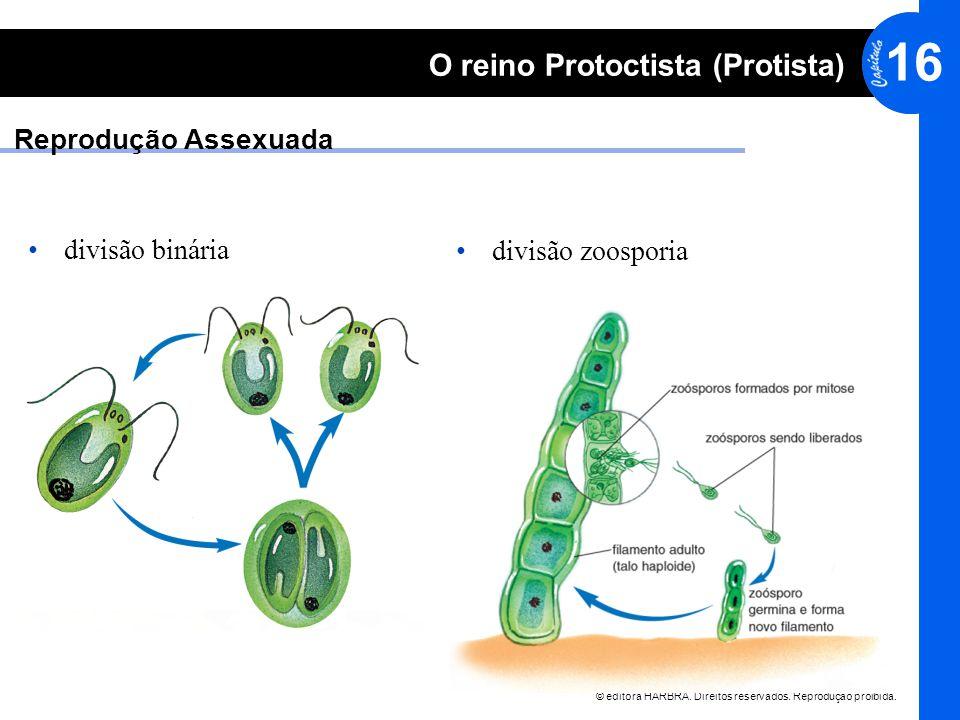 © editora HARBRA. Direitos reservados. Reprodução proibida. 16 O reino Protoctista (Protista) Reprodução Assexuada divisão binária divisão zoosporia