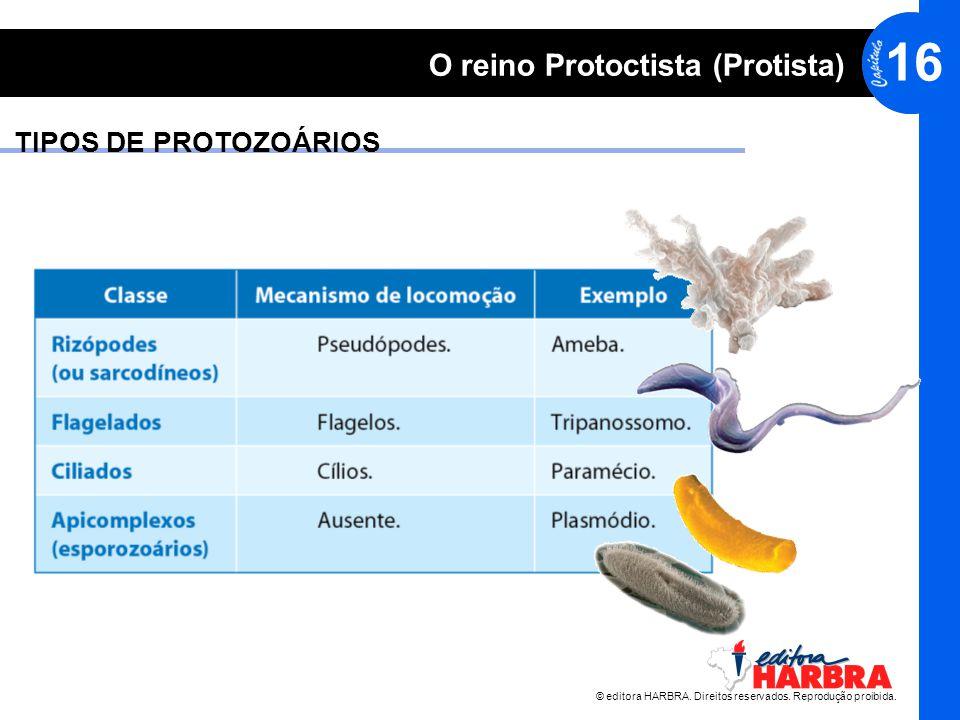 © editora HARBRA. Direitos reservados. Reprodução proibida. 16 O reino Protoctista (Protista) TIPOS DE PROTOZOÁRIOS