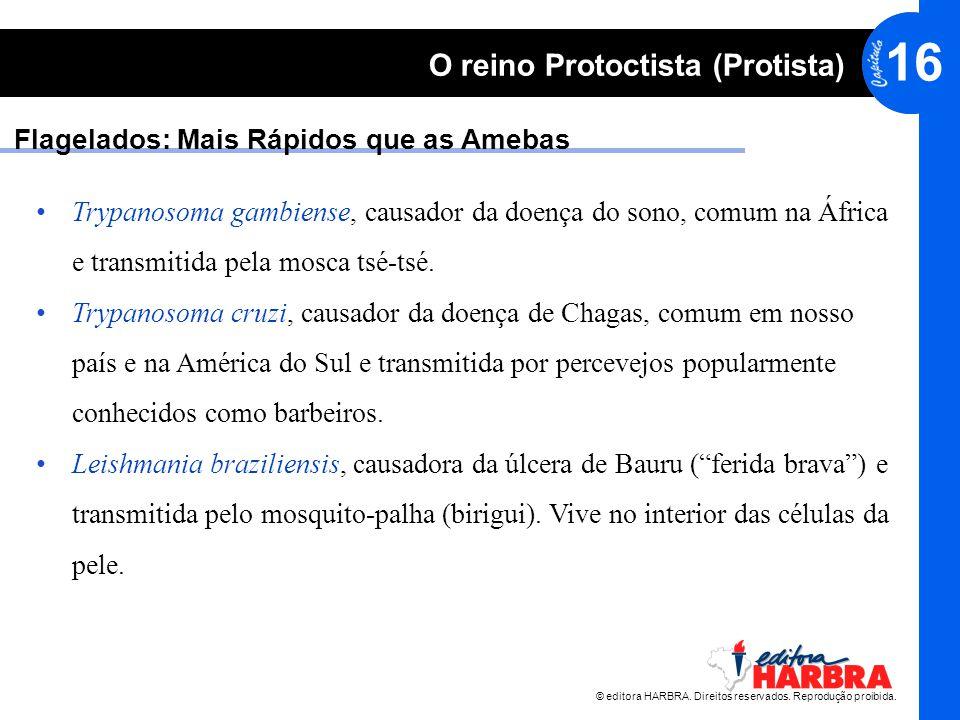© editora HARBRA. Direitos reservados. Reprodução proibida. 16 O reino Protoctista (Protista) Flagelados: Mais Rápidos que as Amebas Trypanosoma gambi
