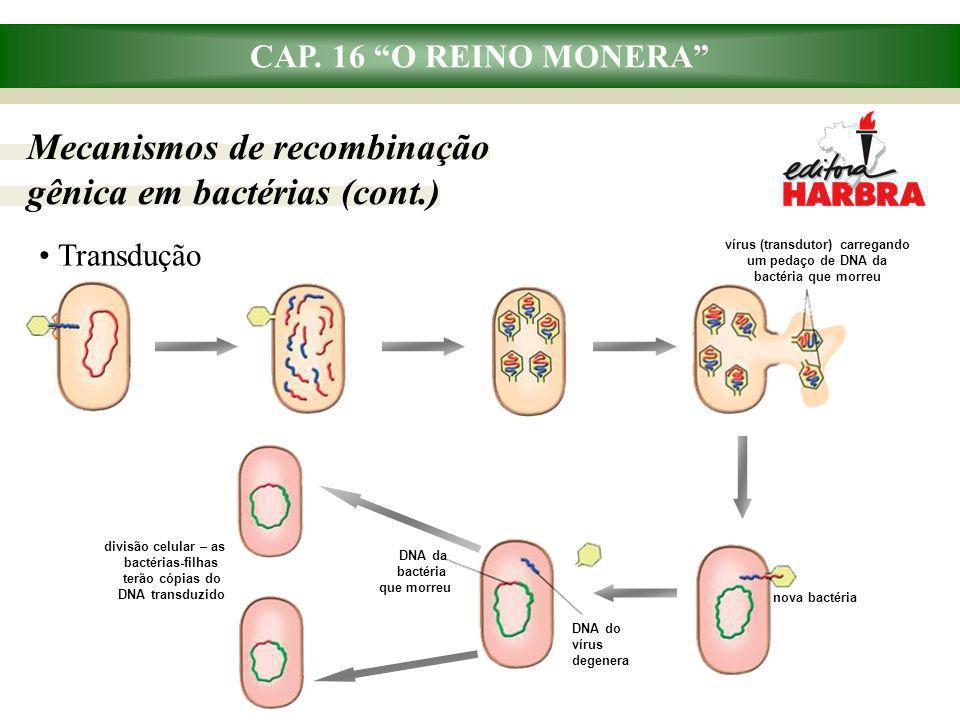 """CAP. 16 """"O REINO MONERA"""" Mecanismos de recombinação gênica em bactérias (cont.) Transdução DNA da bactéria que morreu DNA do vírus degenera divisão ce"""