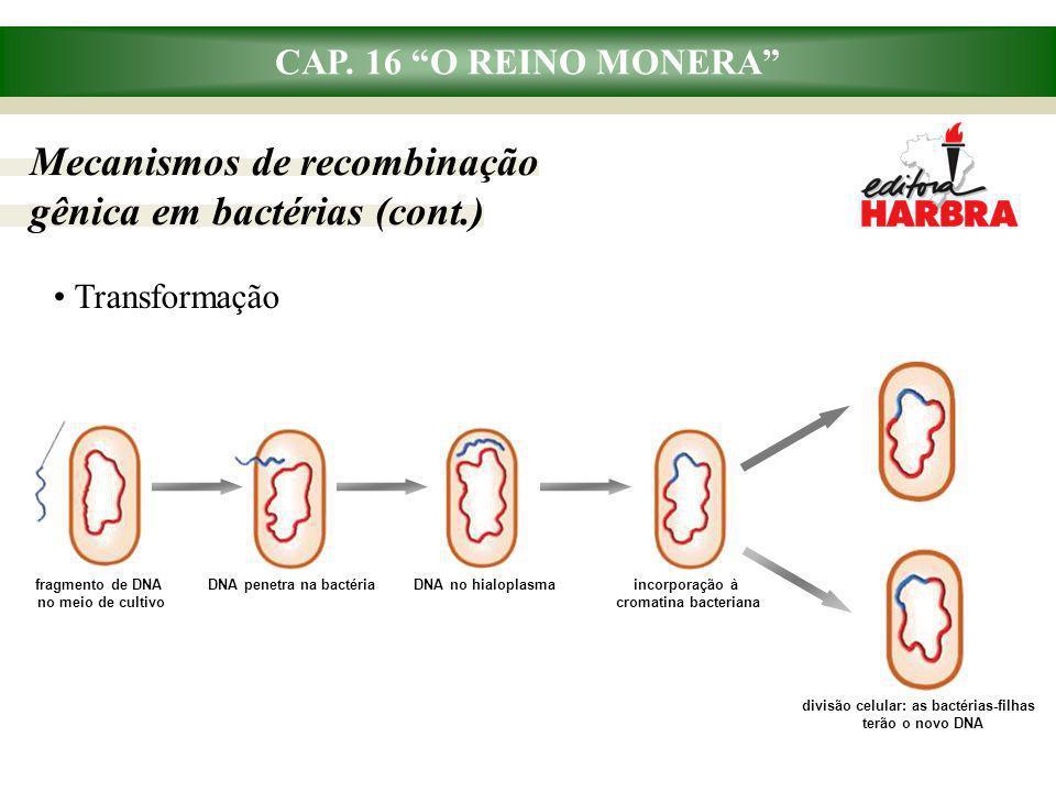 """CAP. 16 """"O REINO MONERA"""" Transformação divisão celular: as bactérias-filhas terão o novo DNA fragmento de DNA no meio de cultivo DNA penetra na bactér"""