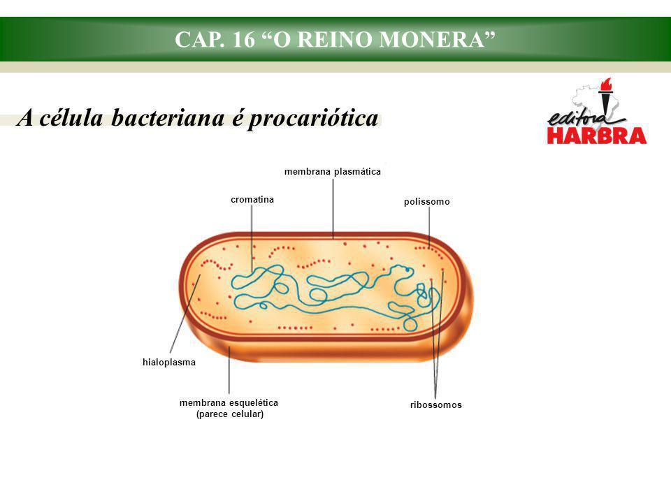 """CAP. 16 """"O REINO MONERA"""" A célula bacteriana é procariótica cromatina membrana plasmática polissomo hialoplasma membrana esquelética (parece celular)"""