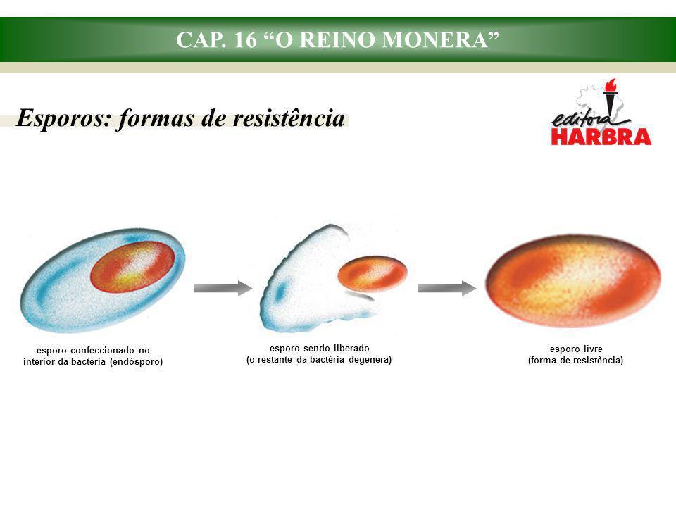 "CAP. 16 ""O REINO MONERA"" Esporos: formas de resistência esporo confeccionado no interior da bactéria (endósporo) esporo livre (forma de resistência) e"