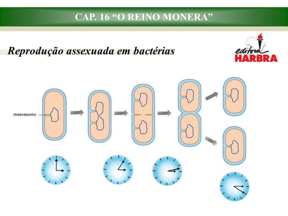CAP. 16 O REINO MONERA Reprodução assexuada em bactérias mesossomo