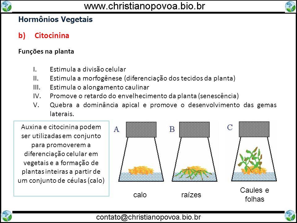 Hormônios Vegetais b) Citocinina Funções na planta I.Estimula a divisão celular II.Estimula a morfogênese (diferenciação dos tecidos da planta) III.Es