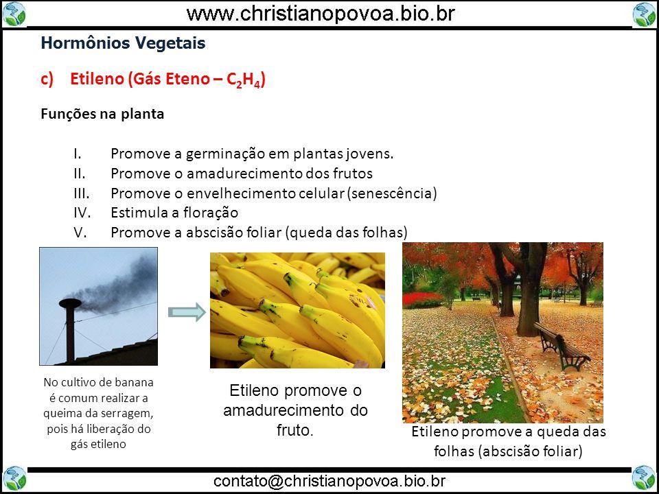 Hormônios Vegetais c) Etileno (Gás Eteno – C 2 H 4 ) Funções na planta I.Promove a germinação em plantas jovens. II.Promove o amadurecimento dos fruto