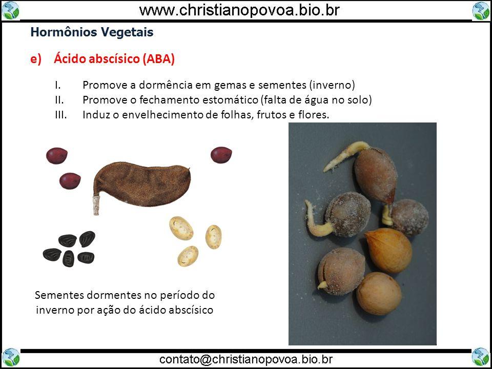Hormônios Vegetais e) Ácido abscísico (ABA) I.Promove a dormência em gemas e sementes (inverno) II.Promove o fechamento estomático (falta de água no s