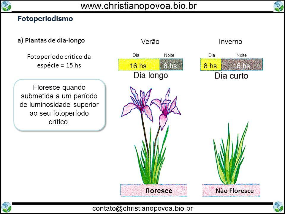 Fotoperiodismo a) Plantas de dia-longo Fotoperíodo crítico da espécie = 15 hs Floresce quando submetida a um período de luminosidade superior ao seu f