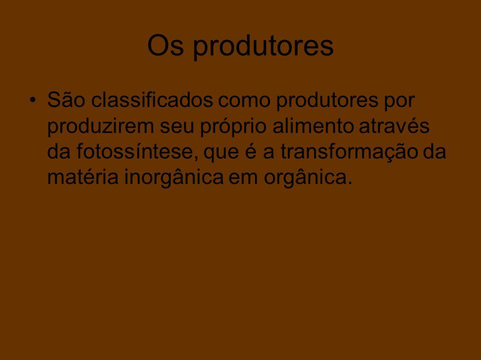 Os produtores São classificados como produtores por produzirem seu próprio alimento através da fotossíntese, que é a transformação da matéria inorgâni