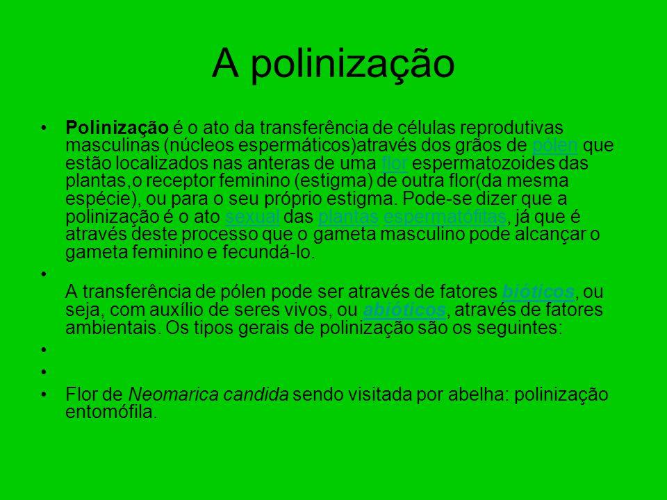 A polinização Polinização é o ato da transferência de células reprodutivas masculinas (núcleos espermáticos)através dos grãos de pólen que estão local