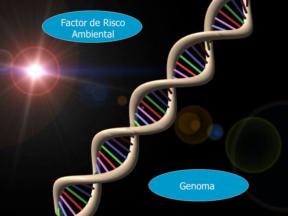 A Cidade Geradora de Poluição Doença Actividades Industriais Actividades não Industriais Hábitos Tabaco Poluição Interior Características dos Edifícios Poluição no Interior dos Edifícios Agentes Biológicos Processos de Produção Síndrome dos Edifícios Doentes Factor de Risco Ambiental Genoma
