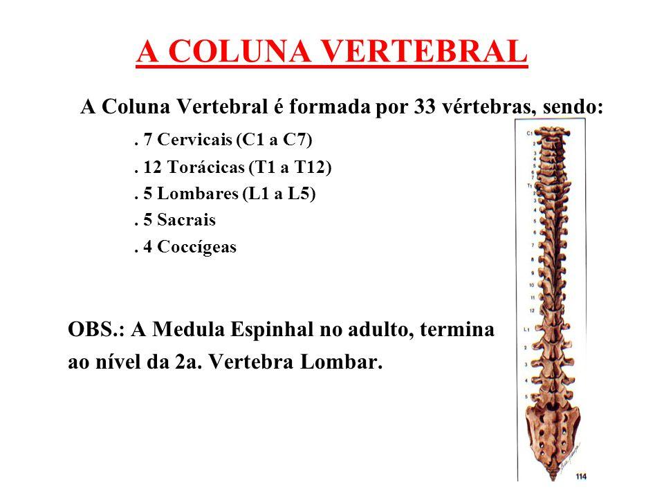 A COLUNA VERTEBRAL A Coluna Vertebral é formada por 33 vértebras, sendo:. 7 Cervicais (C1 a C7). 12 Torácicas (T1 a T12). 5 Lombares (L1 a L5). 5 Sacr