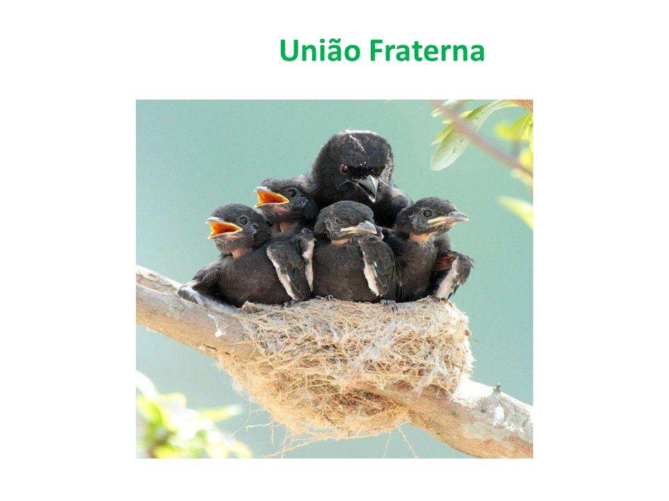 União Fraterna