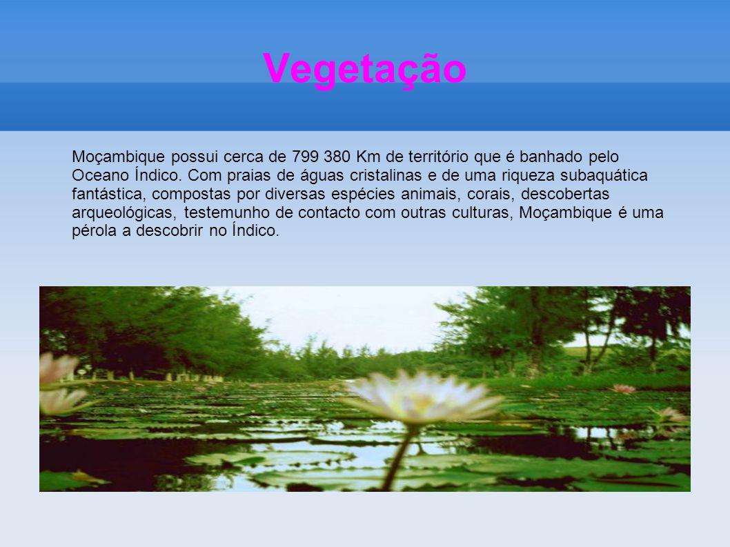 Vegetação Moçambique possui cerca de 799 380 Km de território que é banhado pelo Oceano Índico. Com praias de águas cristalinas e de uma riqueza subaq