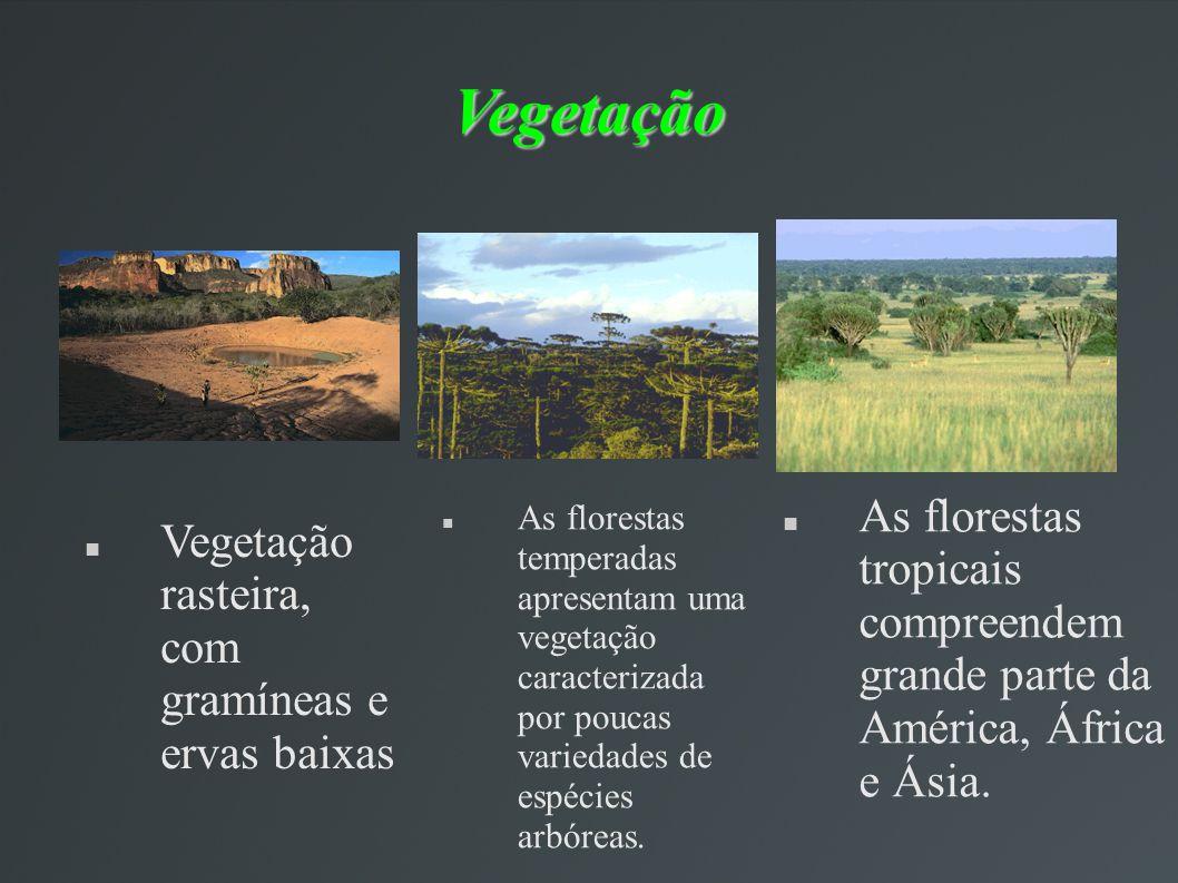 Vegetação As florestas tropicais compreendem grande parte da América, África e Ásia. As florestas temperadas apresentam uma vegetação caracterizada po