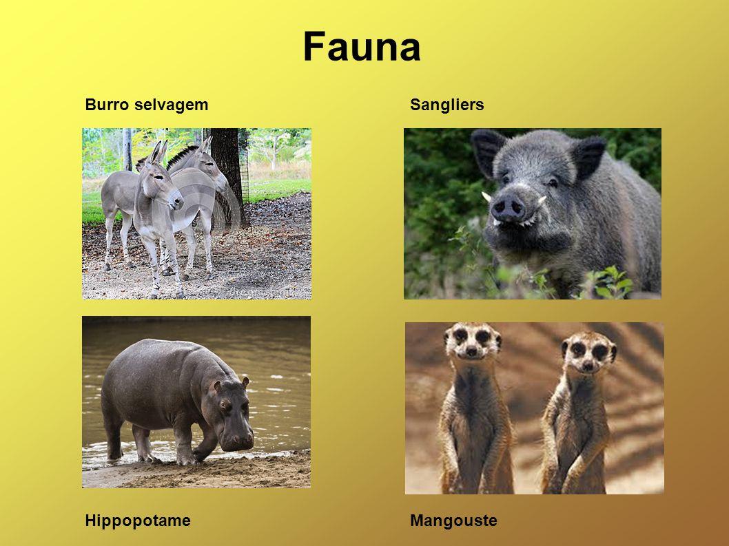 Fauna Burro selvagemSangliers HippopotameMangouste