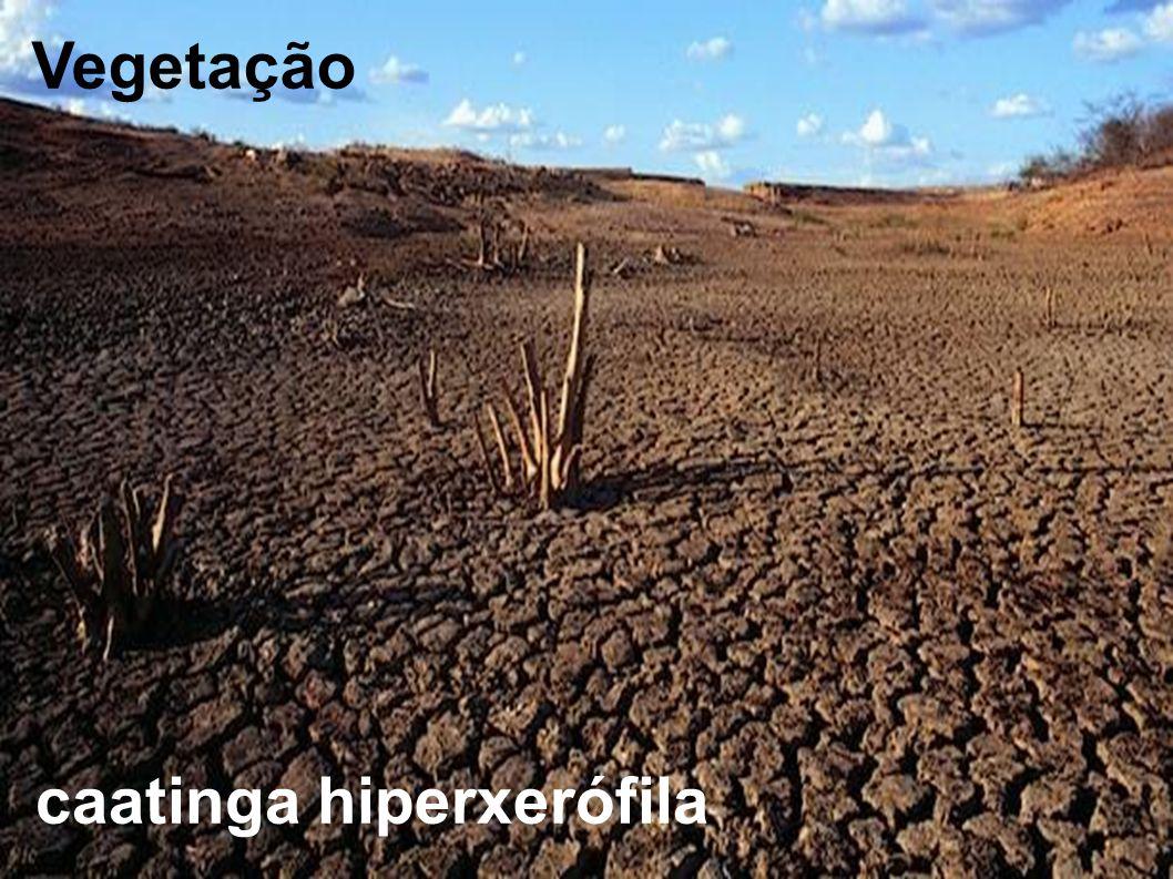 Vegetação caatinga hiperxerófila