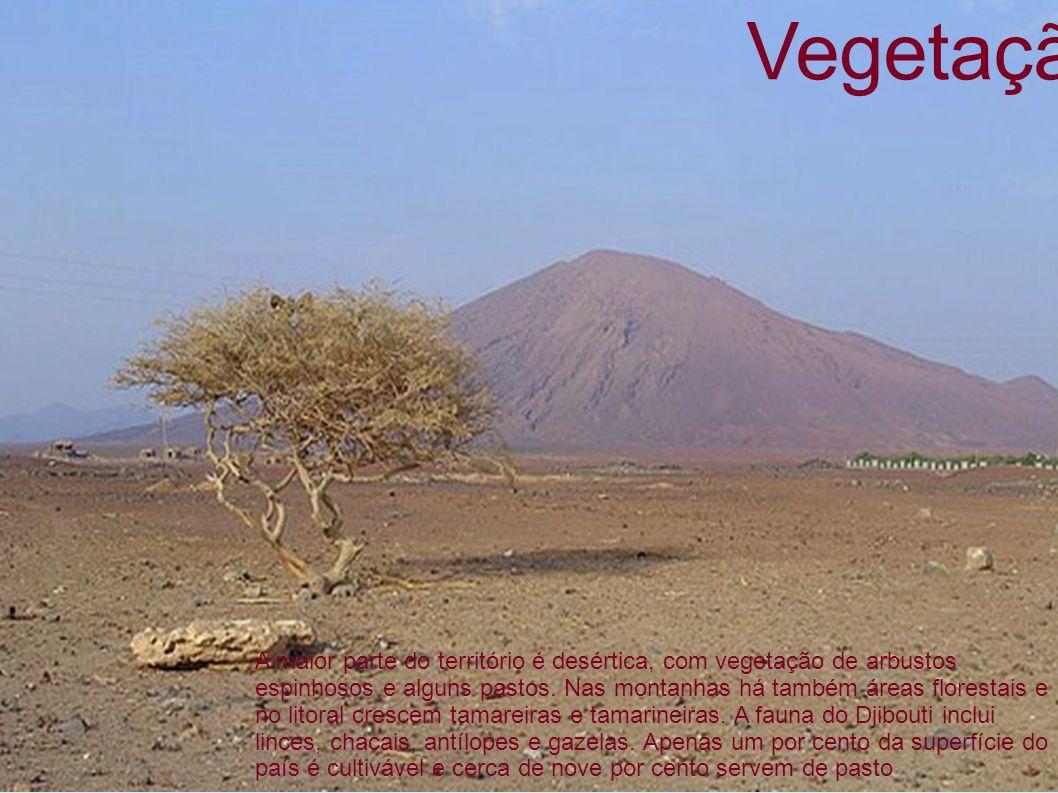 Vegetação A maior parte do território é desértica, com vegetação de arbustos espinhosos e alguns pastos. Nas montanhas há também áreas florestais e no