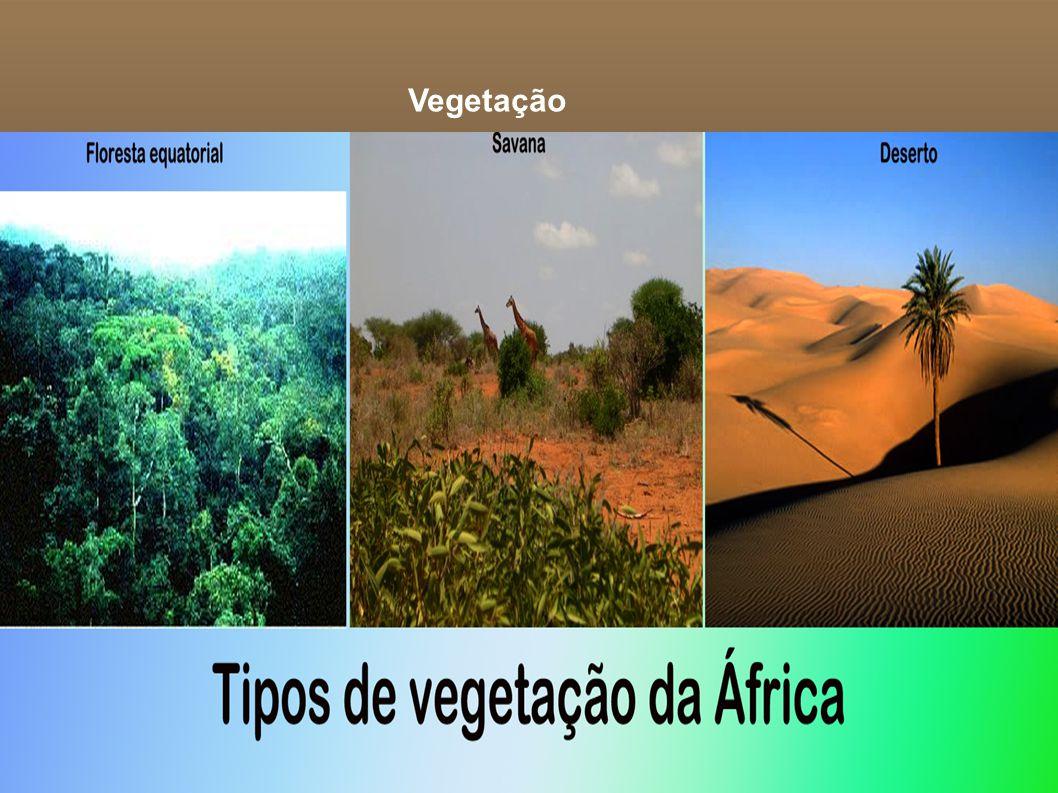 Vegetação