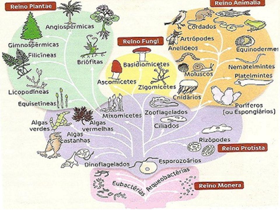 RELAÇÕES INTRA-ESPECÍFICAS a) Colônias: São associações de indivíduos da mesma espécie, sendo que ocorre uma divisão de tarefas entre eles.