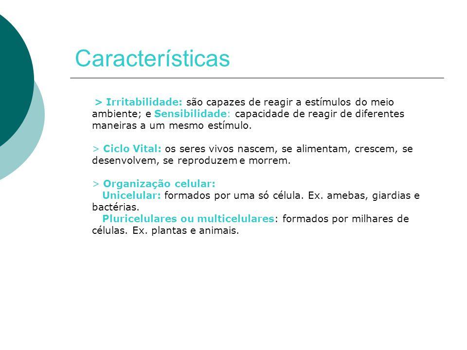 Características  Nutrição: Autótrofos: sintetizam seu próprio alimento.