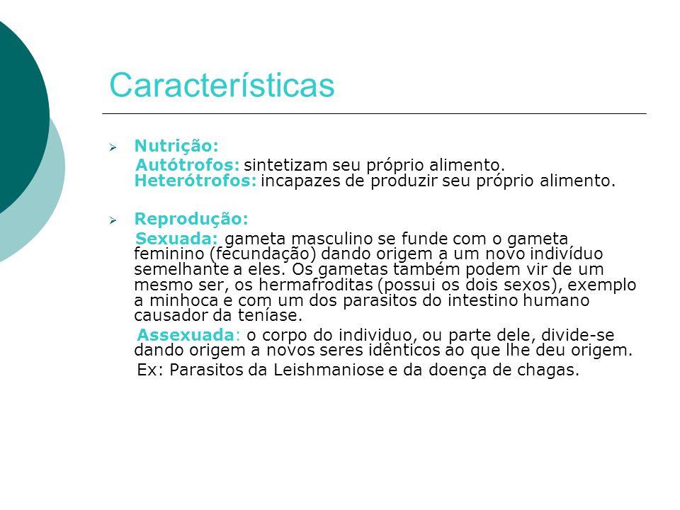 Divisão dos Parasitos Principais grupos de parasitos do homem: – Protozoários – Helmintos – Artrópodes