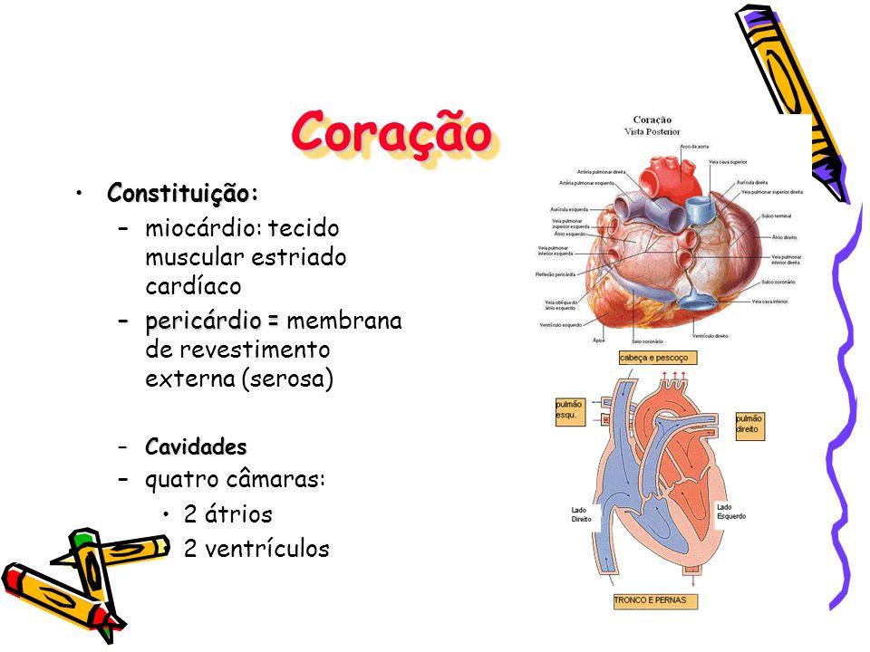 CoraçãoCoração Constituição:Constituição: –miocárdio: tecido muscular estriado cardíaco –pericárdio = –pericárdio = membrana de revestimento externa (