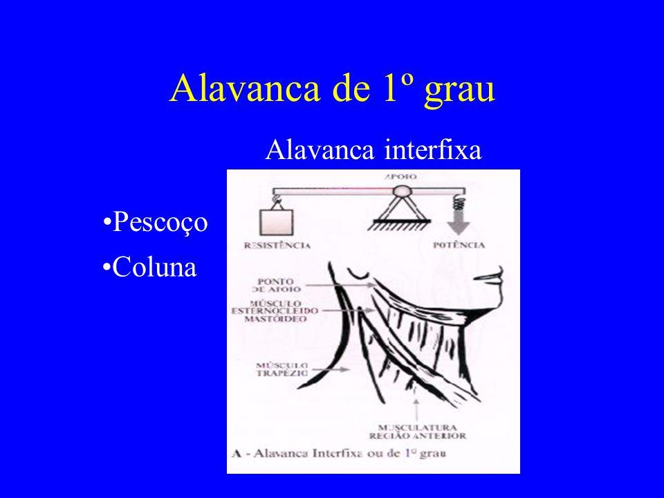 Alavanca de 1º grau Alavanca interfixa Pescoço Coluna