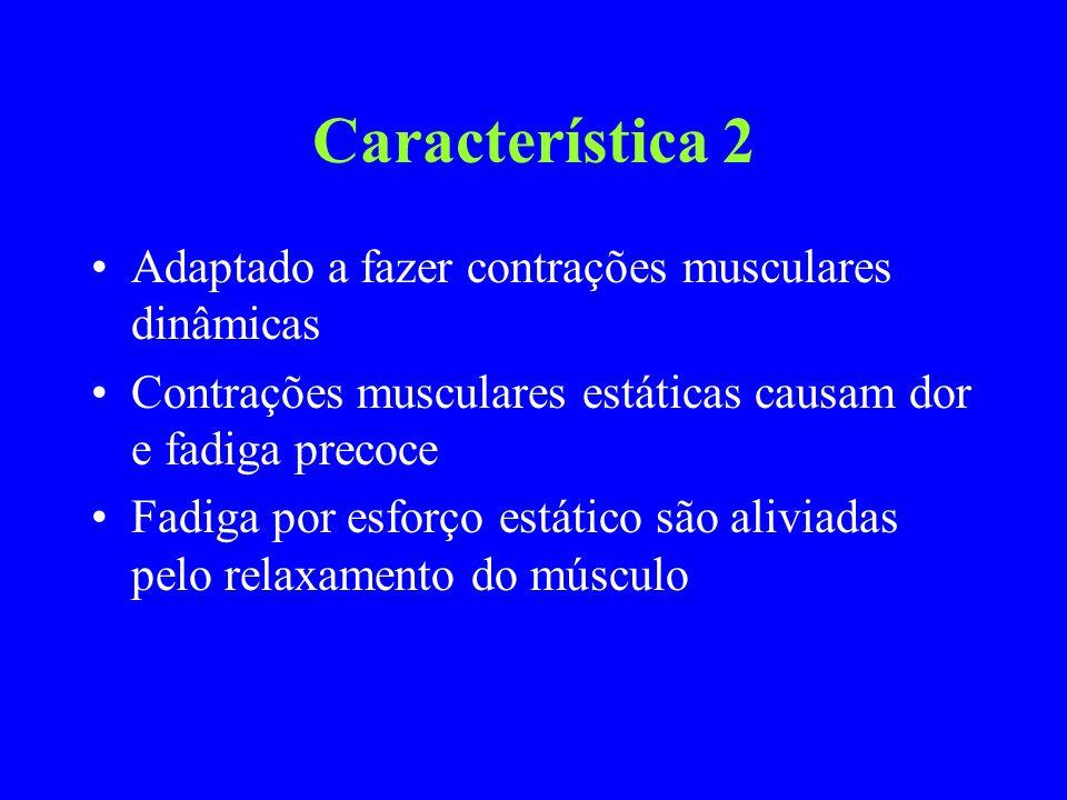 Característica 2 Adaptado a fazer contrações musculares dinâmicas Contrações musculares estáticas causam dor e fadiga precoce Fadiga por esforço estát