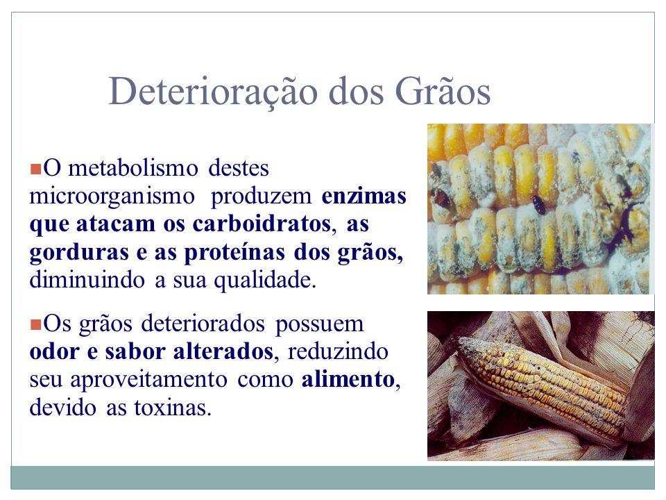 Deterioração dos Grãos n O metabolismo destes microorganismo produzem enzimas que atacam os carboidratos, as gorduras e as proteínas dos grãos, diminu