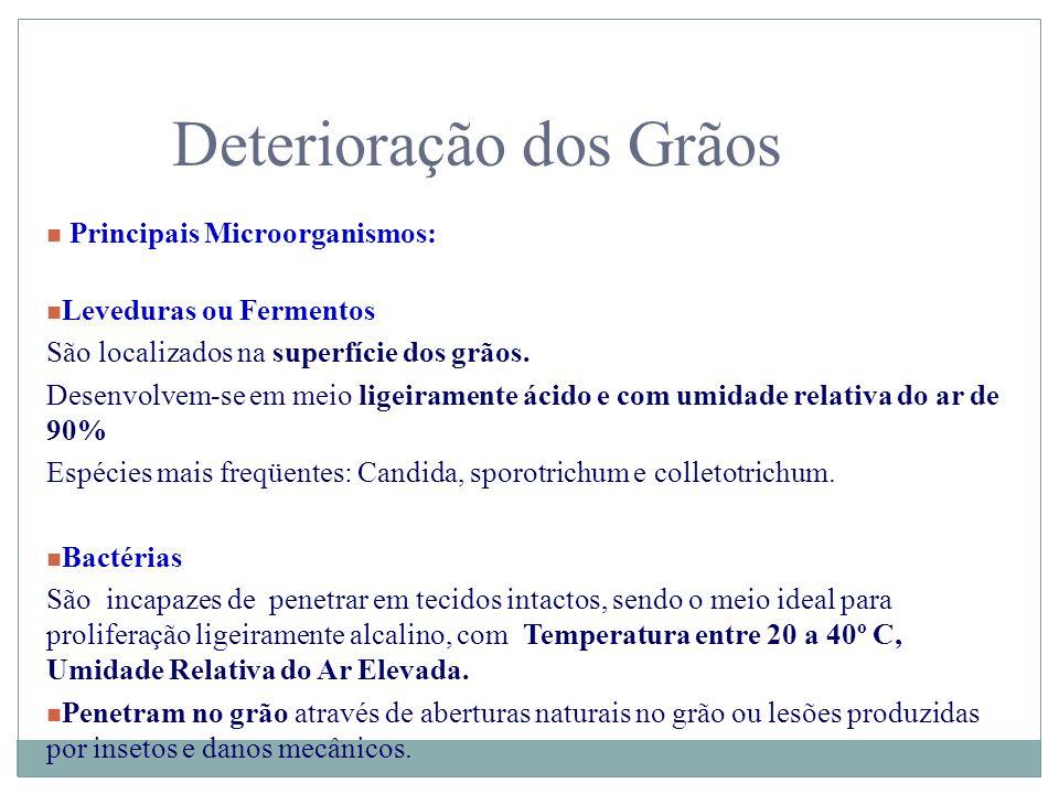 Deterioração dos Grãos n Principais Microorganismos: n Leveduras ou Fermentos São localizados na superfície dos grãos. Desenvolvem-se em meio ligeiram