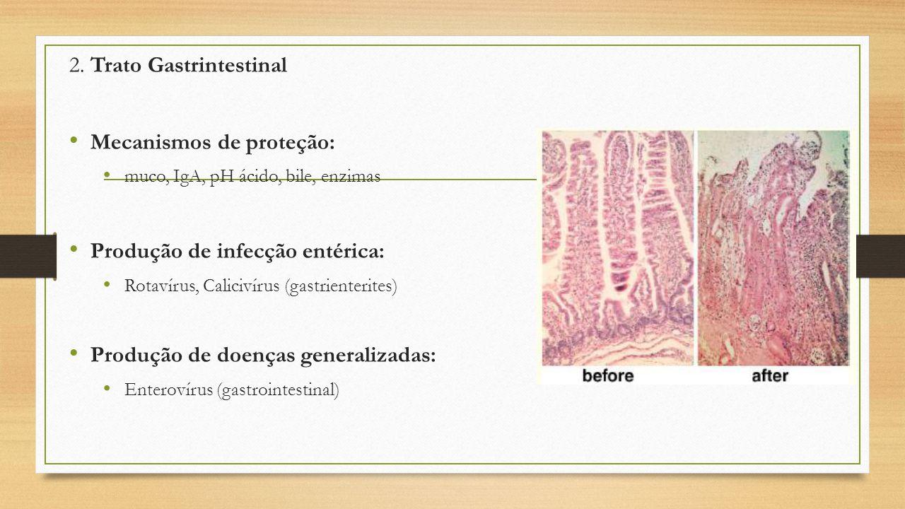 2. Trato Gastrintestinal Mecanismos de proteção: muco, IgA, pH ácido, bile, enzimas Produção de infecção entérica: Rotavírus, Calicivírus (gastrienter