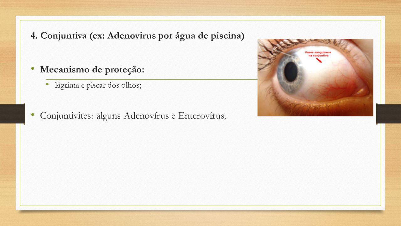 4. Conjuntiva (ex: Adenovirus por água de piscina) Mecanismo de proteção: lágrima e piscar dos olhos; Conjuntivites: alguns Adenovírus e Enterovírus.