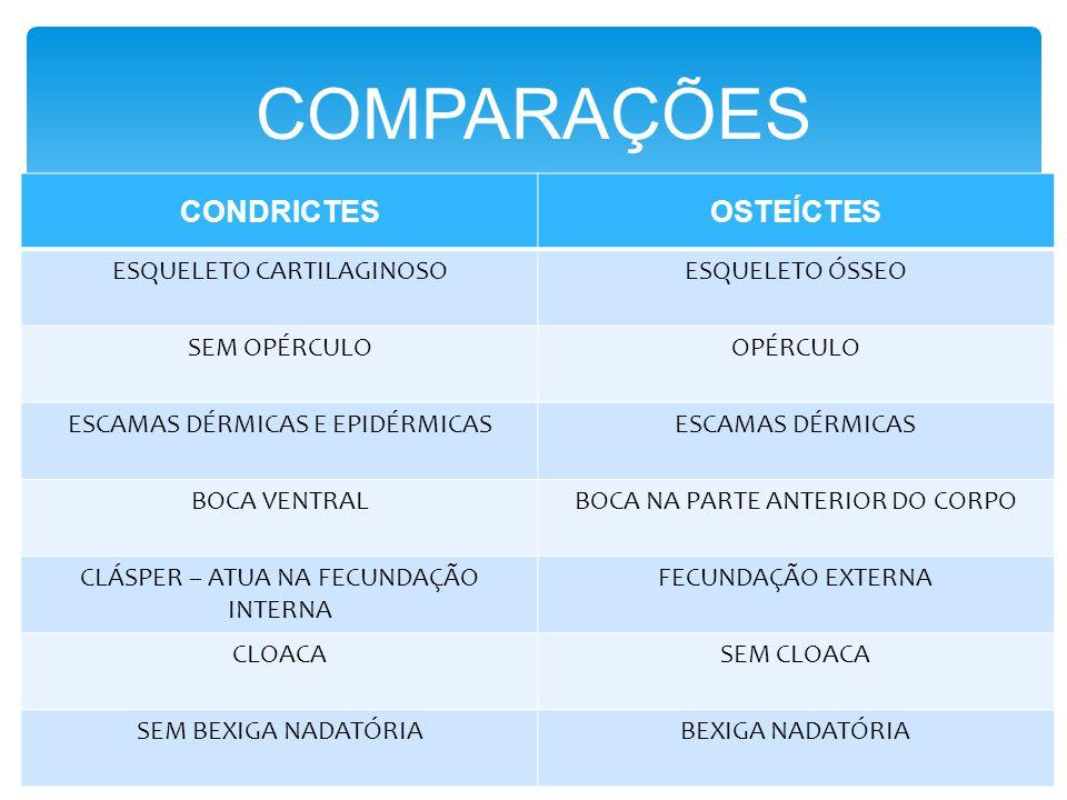 COMPARAÇÕES CONDRICTESOSTEÍCTES ESQUELETO CARTILAGINOSOESQUELETO ÓSSEO SEM OPÉRCULOOPÉRCULO ESCAMAS DÉRMICAS E EPIDÉRMICASESCAMAS DÉRMICAS BOCA VENTRA
