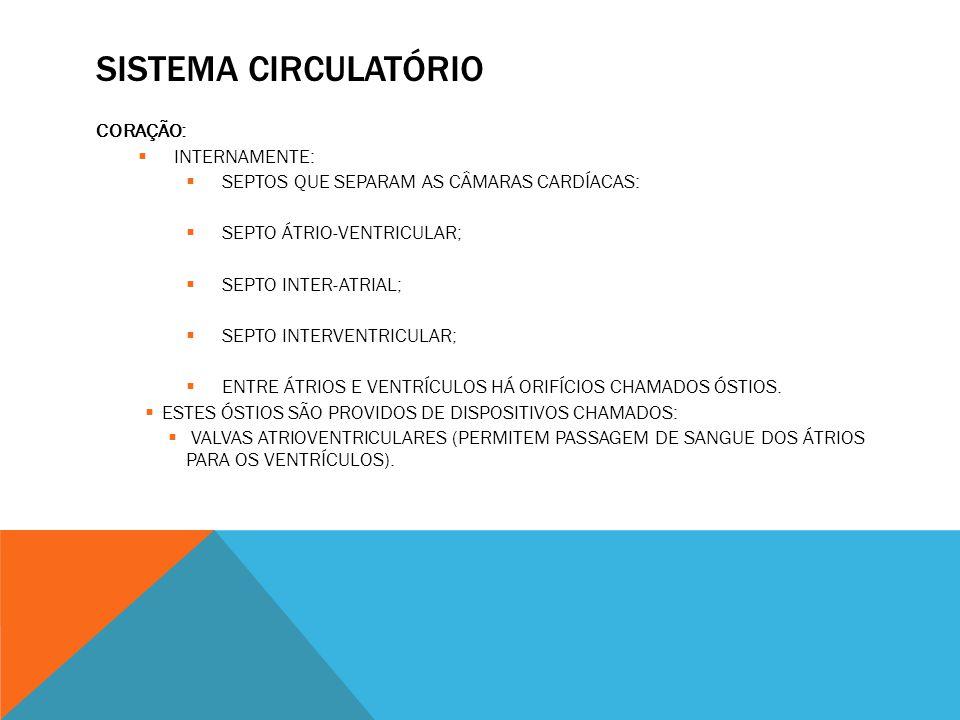 SISTEMA CIRCULATÓRIO CORAÇÃO:  INTERNAMENTE:  SEPTOS QUE SEPARAM AS CÂMARAS CARDÍACAS:  SEPTO ÁTRIO-VENTRICULAR;  SEPTO INTER-ATRIAL;  SEPTO INTERVENTRICULAR;  ENTRE ÁTRIOS E VENTRÍCULOS HÁ ORIFÍCIOS CHAMADOS ÓSTIOS.