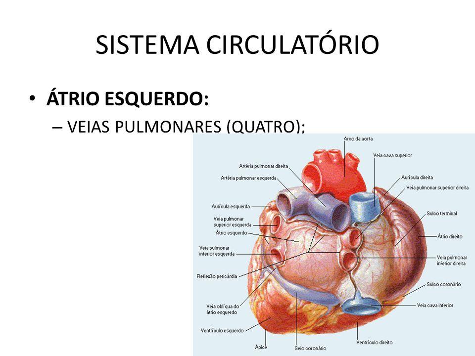 ÁTRIO ESQUERDO: – VEIAS PULMONARES (QUATRO);
