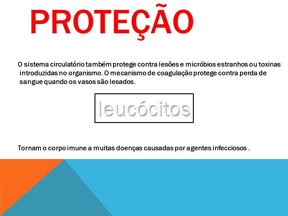 SISTEMA CIRCULATÓRIO SISTEMA DE CONDUÇÃO: