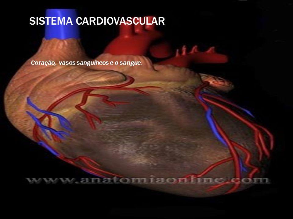 SISTEMA CARDIOVASCULAR Coração, vasos sanguíneos e o sangue.