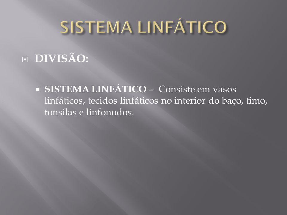  DIVISÃO:  SISTEMA LINFÁTICO – Consiste em vasos linfáticos, tecidos linfáticos no interior do baço, timo, tonsilas e linfonodos.