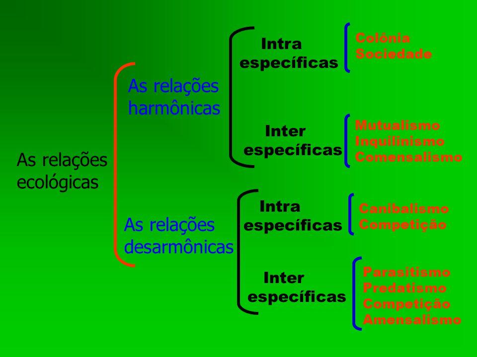 As relações ecológicas As relações desarmônicas As relações harmônicas Intra específicas Inter específicas Intra específicas Inter específicas Colônia Sociedade Mutualismo Inquilinismo Comensalismo Parasitismo Predatismo Competição Amensalismo Canibalismo Competição
