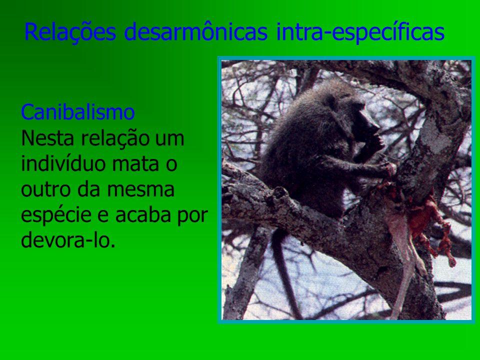 Relações desarmônicas intra-específicas Canibalismo Nesta relação um indivíduo mata o outro da mesma espécie e acaba por devora-lo.