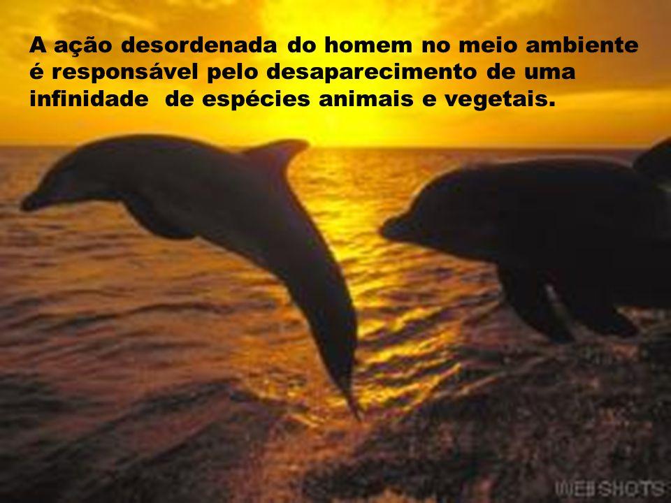 A ação desordenada do homem no meio ambiente é responsável pelo desaparecimento de uma infinidade de espécies animais e vegetais.
