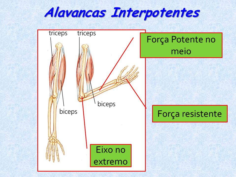 Alavancas Interpotentes Força Potente no meio Eixo no extremo Força resistente