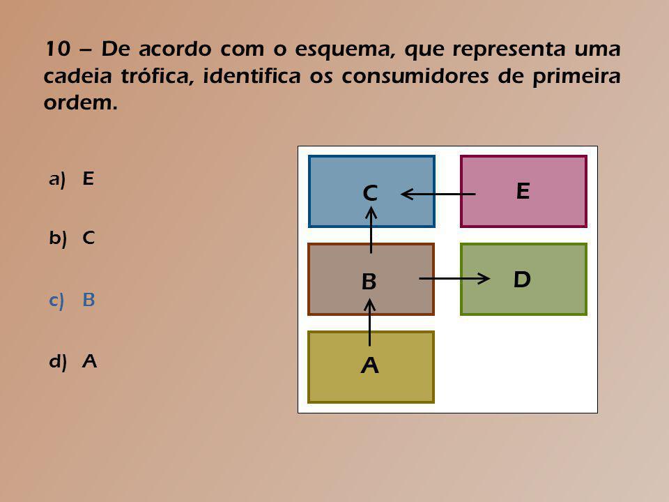 9 – Observa o esquema que representa, muito simplificadamente o ciclo da matéria.