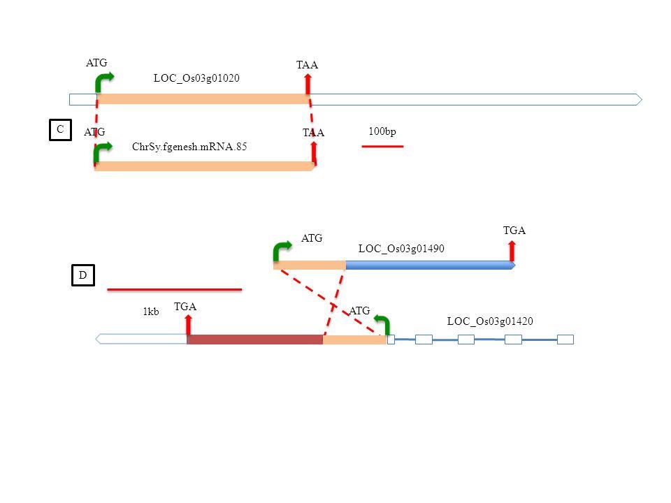 LOC_Os03g01020 ChrSy.fgenesh.mRNA.85 ATG TAA 100bp C LOC_Os03g01420 LOC_Os03g01490 ATG TGA 1kb TGA ATG D