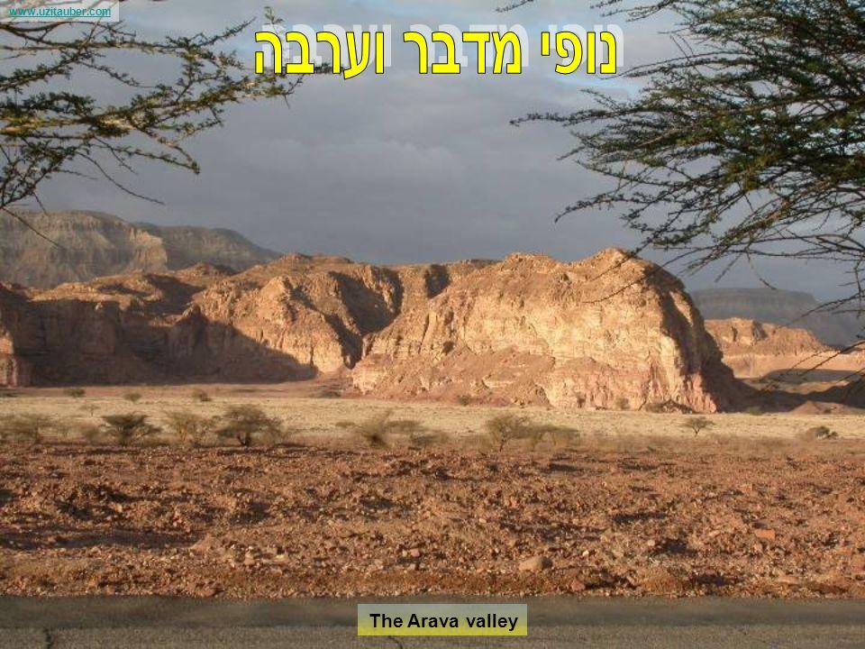 www.uzitauber.com Ancient Harbors