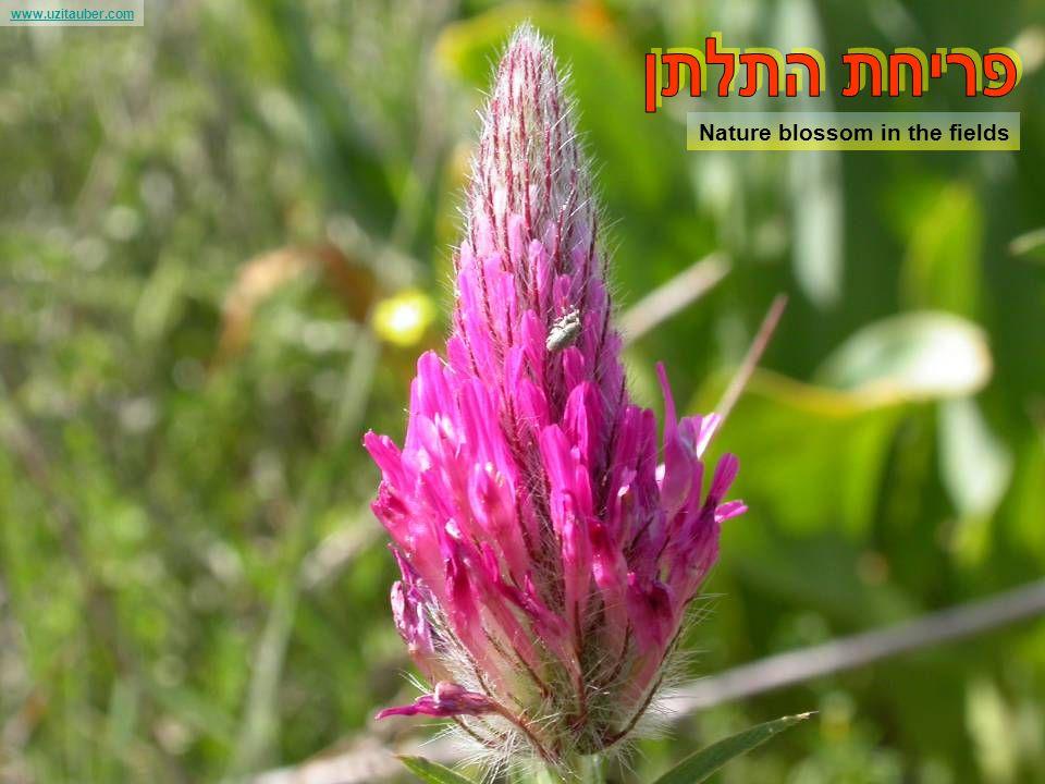 www.uzitauber.com The Arava valley